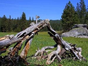 troncos, prados