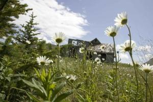 majeur, le plan, les fleurs blanches, prairie, avant, chalets