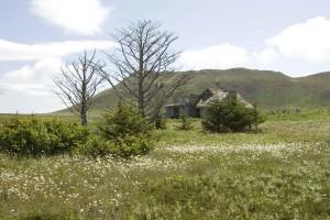 meadow, great, scenics