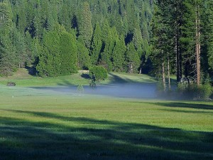 Луки, туман, зелений
