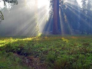 meadows, foggy, smokey, sunbeams