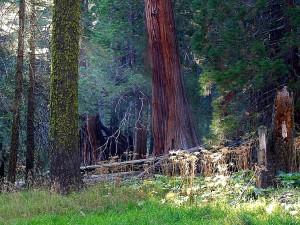 ทุ่งหญ้า lightrays คาน ป่า ต้นไม้