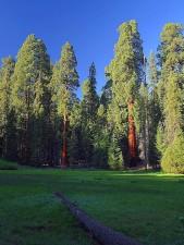 prairies, sequoia