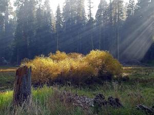 meadows, smokey