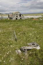 vechi, abandonate, din lemn, vărsat, Lunca, flori