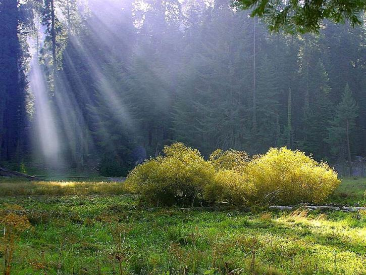 Free Picture Rays Meadow