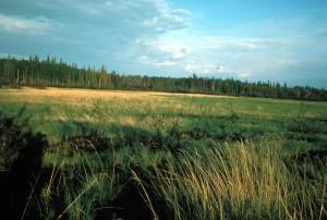 river, meadow, scenics