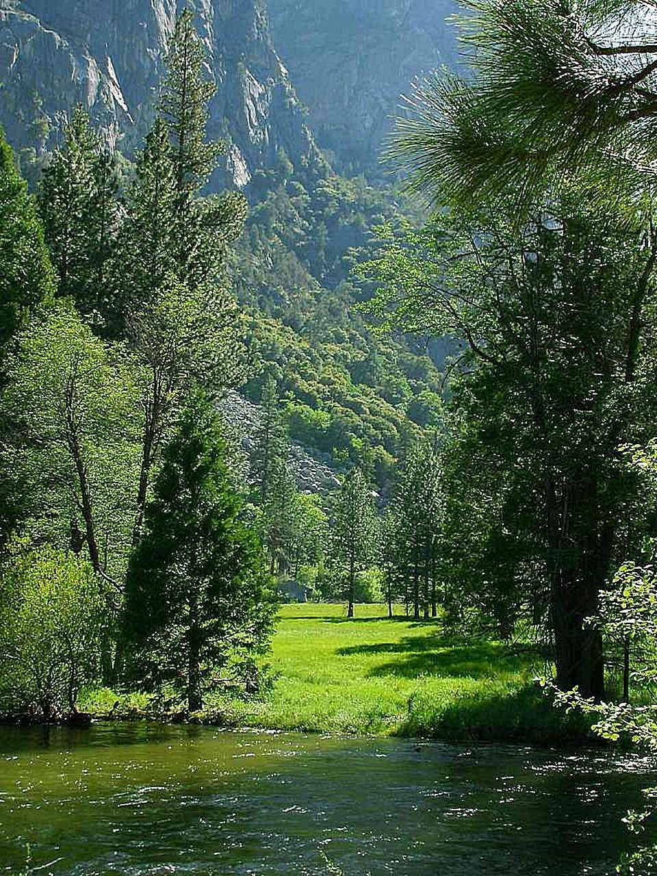Free Picture Sequoia Parks Meadows River Streams
