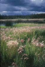 summer, storm, meadow