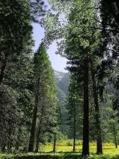trær, enger