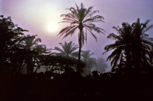 palm trees, night, Africa