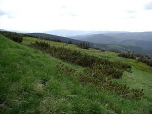 verde, montaña, campos