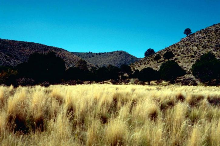 guadalupe, mountains