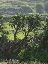 hedge, green, tree, mountain