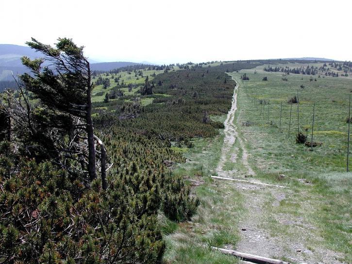 montagne, nature, habitat