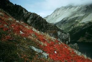 rouge, montagne, filds, paysage