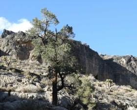 tree, hillside, mountainous, region