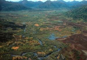 vivid, hues, appear, trees, tundra