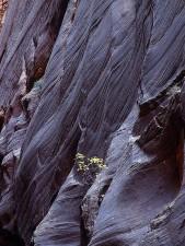 falaises, rétrécit, Zion, parc national