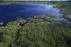 aerial, wetlands, Okefenokee