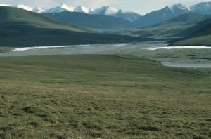 Арктика, пустинята, убежище, Аляска