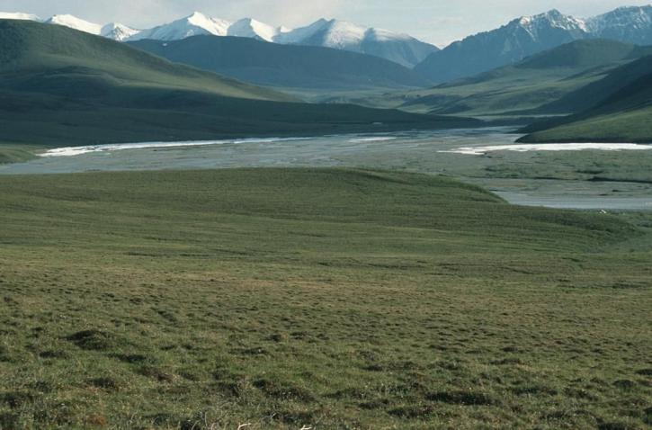 북극, 황야, 피난처, 알래스카