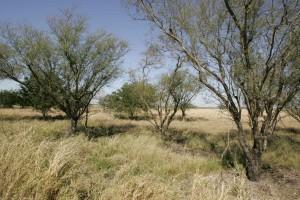 sèches, habitat, élevé, graminées
