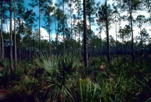 Everglades, parco nazionale