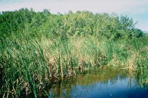everglades, national park, Florida