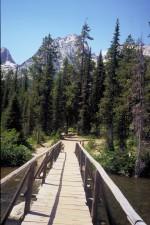 forest, grand, Teton, national park
