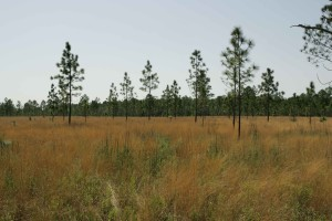 sol, couverture, bas, croissant, arbustes, arbres épars,