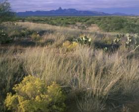 hábitat, escénico, Baboquivari, pico, fondo, paisaje