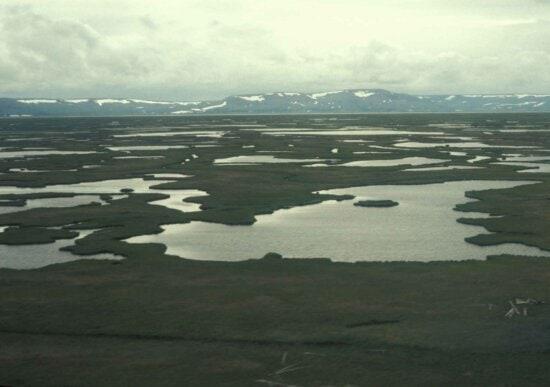 hazen, bay, Yukon, delta, refuge