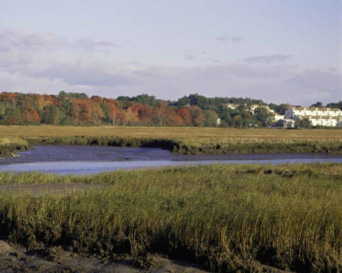 Rachel Carson Wildlife Refuge - Maine.