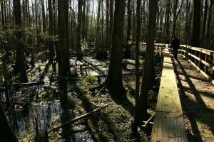 refuge, boardwalks, enhance, wildlife, viewing, experience