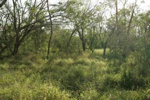 refuge, habitat, plants, green, habitat