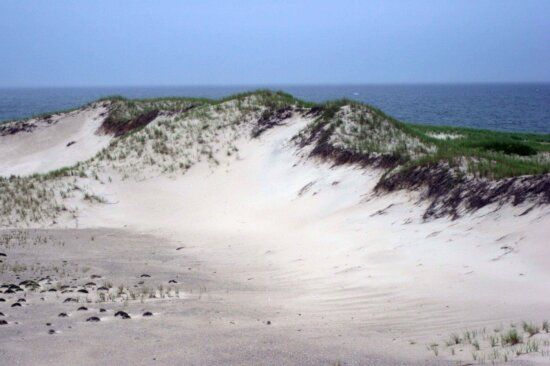 sand, dune, Monomoy, national park