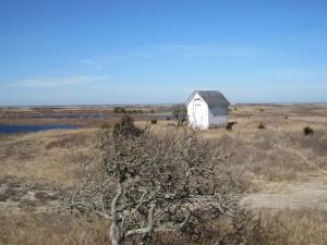 scenic, wilderness, refuge, Monomoy, island