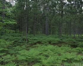 seney, villmark, tilflukt, Michigan