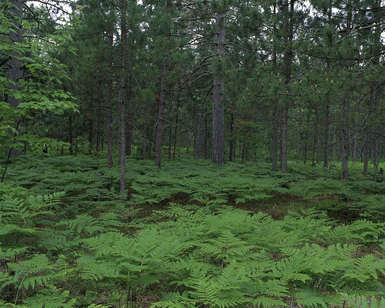 экосистема леса фото задача как