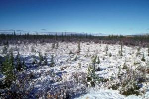 snø, scene, Tetlin, villmark, tilflukt