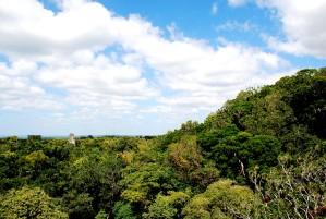 Guatemalas regering, etableret, Maya, biosfæren, reserven, 1990, opdelt, tre zoner