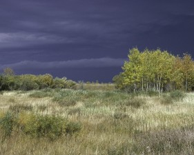 paludi, boschi, Agassiz, selvaggia, rifugio