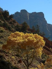arbre, Zion, parc national