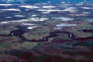 treeless, bogs, interspersed, spruce