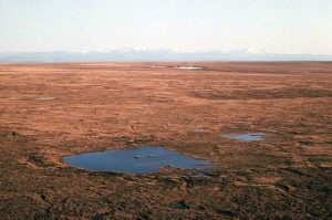 tundra, olhando, brooks, gama