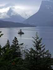 vilda, gås, ön, glacier nationalpark