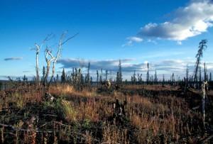 wildlife, refuge, vegetation