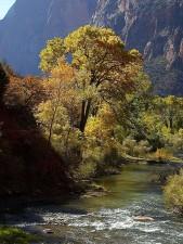zion, parc national, jaune