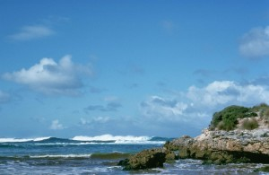 Ocean, livsmiljö, kustlinjen, känguru, island, Australien